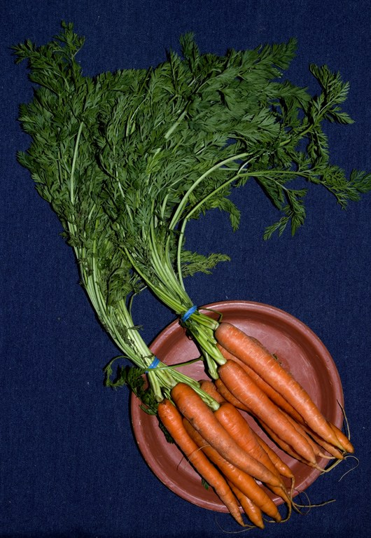Carrots and carrot tops (1.5-2 bunches)