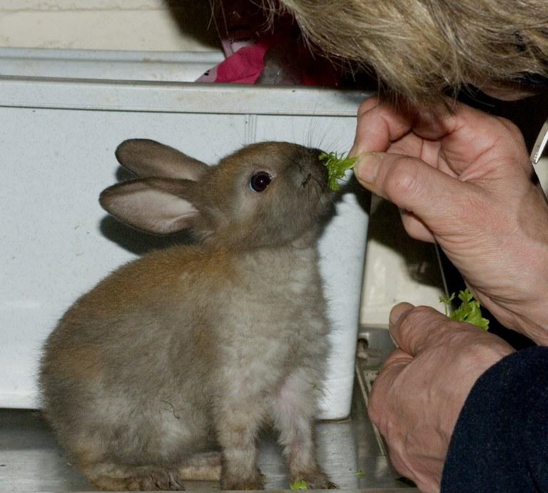 New baby rabbit