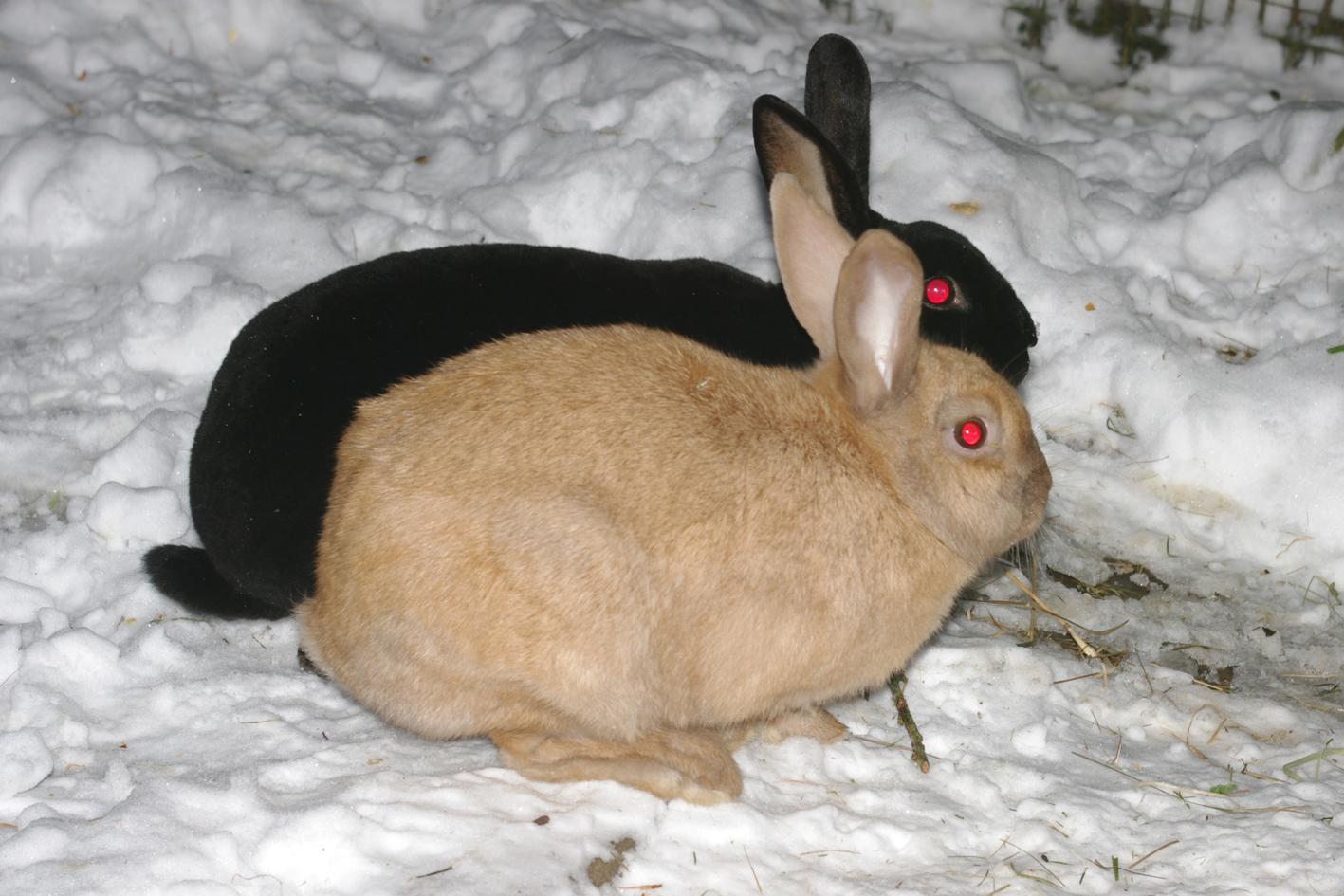 bunjie-and-sarah-in-snow.jpg
