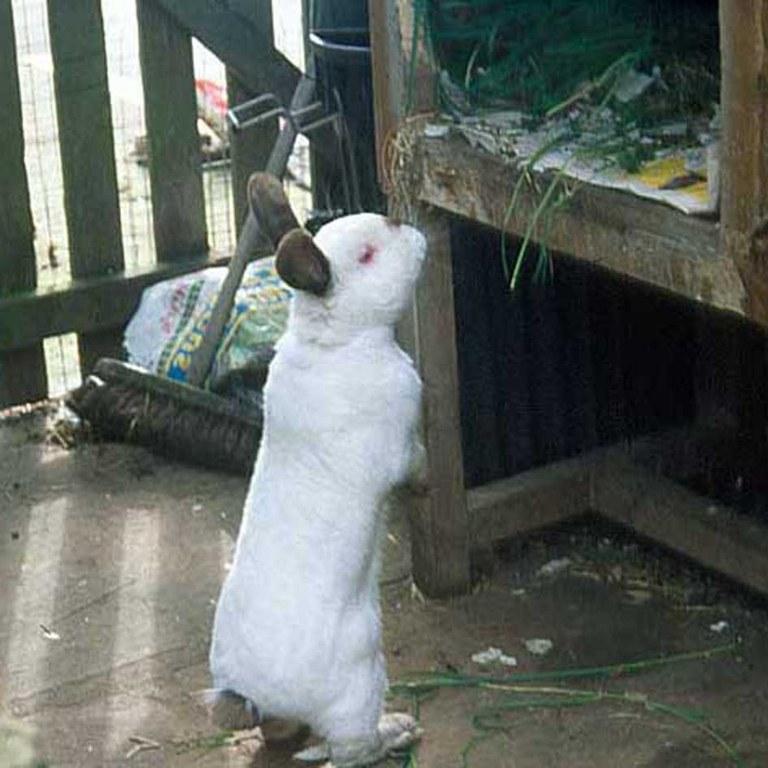 Rabbit looking into hutch