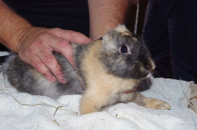 Rabbit without ears and a leg.