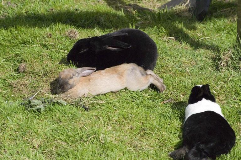 Basking in sun