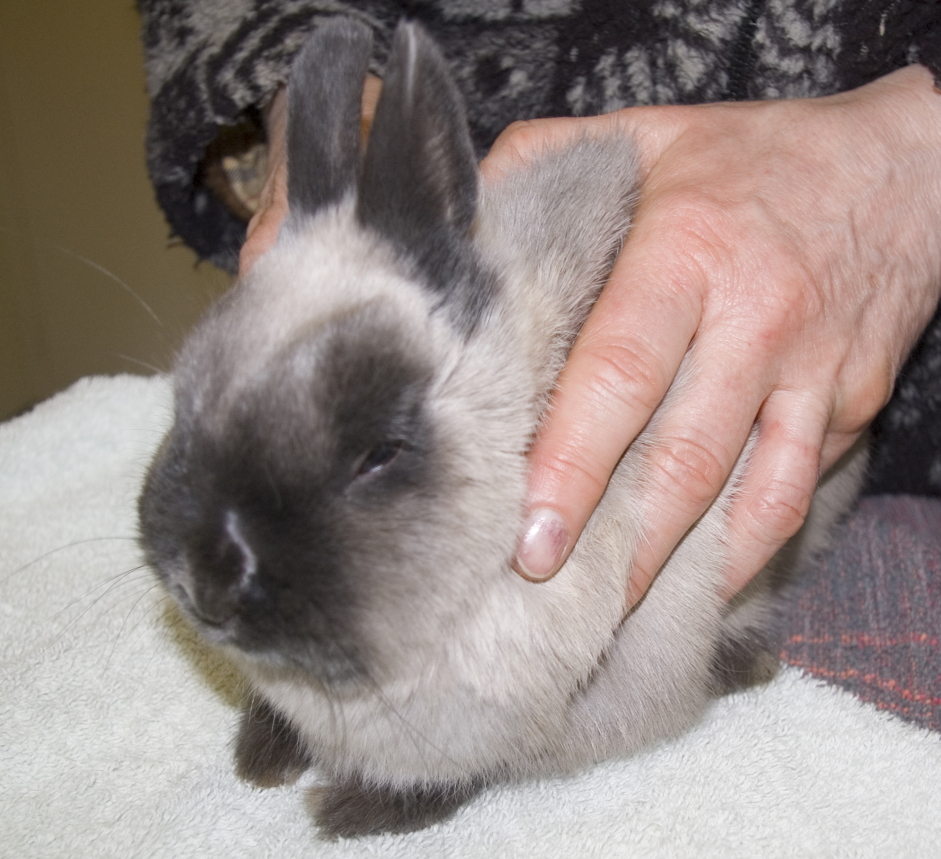 Owner holding rabbit with ringworm