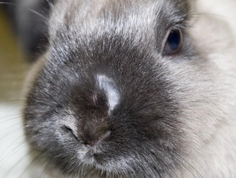 Rabbit with ringworm